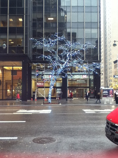 winter tree on 3rd avenue in NYC