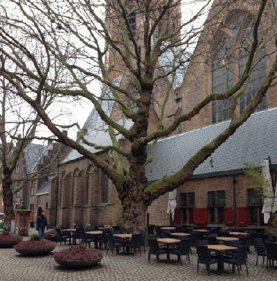 magnificent tree near Grote Kerk in The Hague