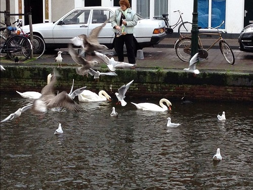 feeding the birds in The Hague