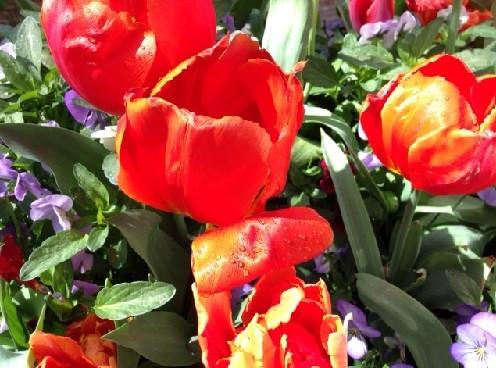 flowers in Utrecht
