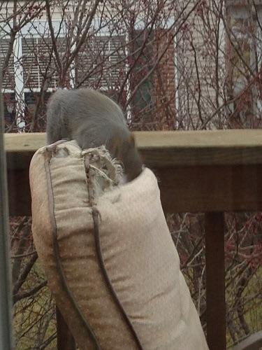 Squirrel patio chair killer 2