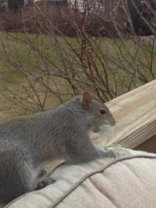 Squirrel patio chair killer 1