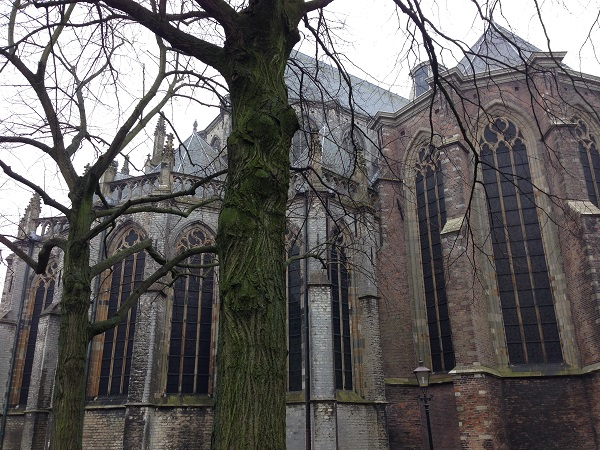 trees in front of a Dutch church