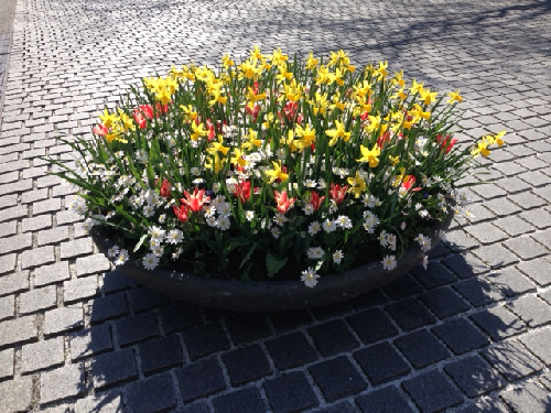 Springtime flowers in The Hague