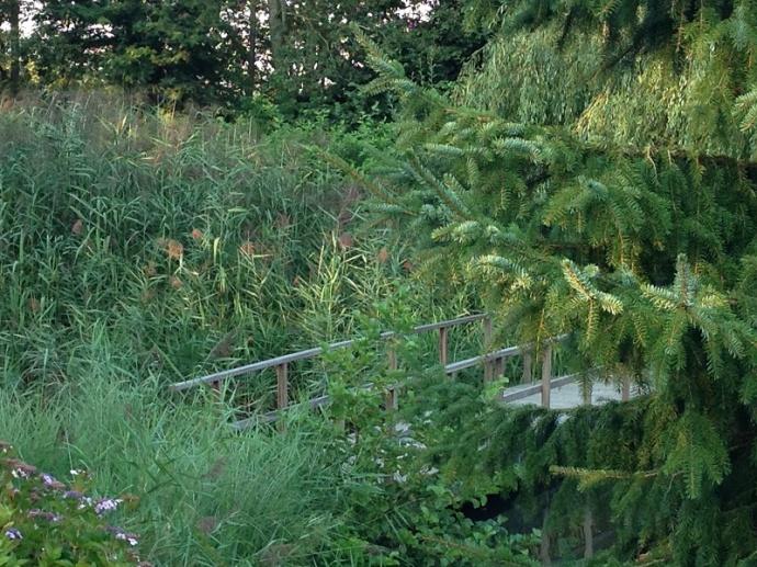 wooden bridge through the trees