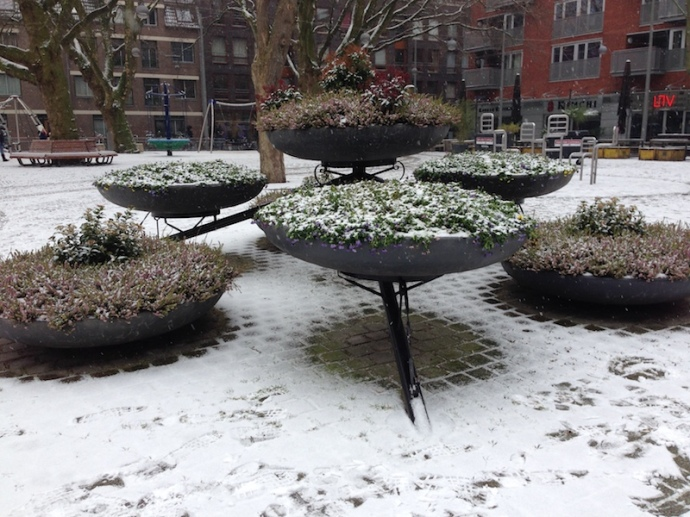 snow-on-flowers-in-the-hague