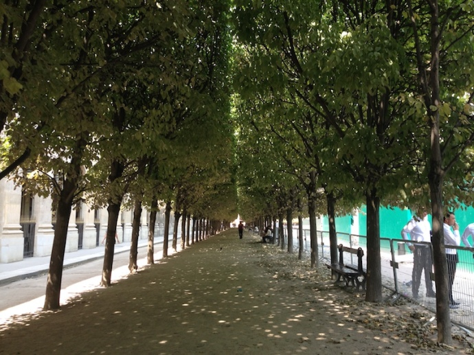 Line of trees at the garden at Palais Royal, Paris
