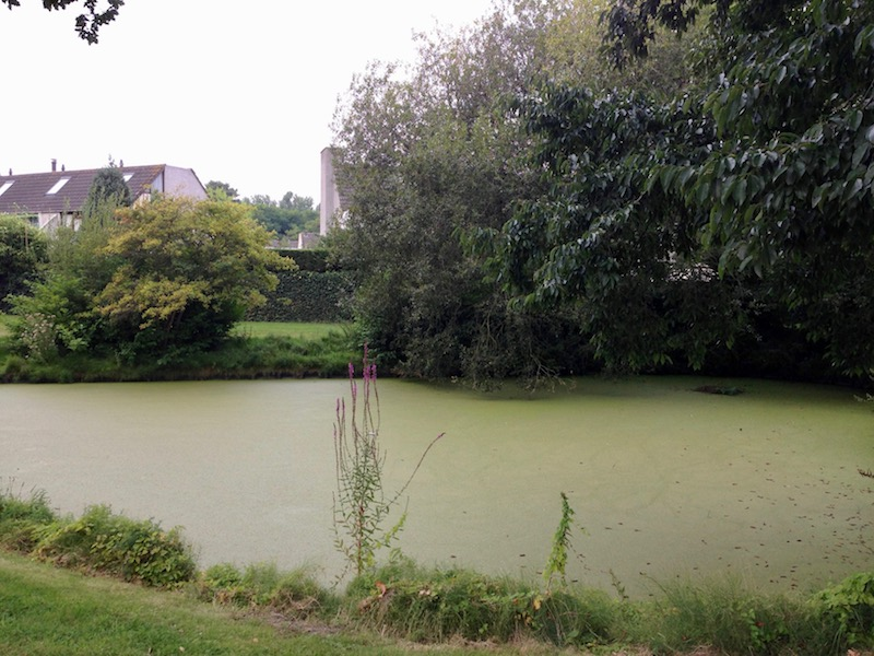 Algae-filled pond in Wassenaar