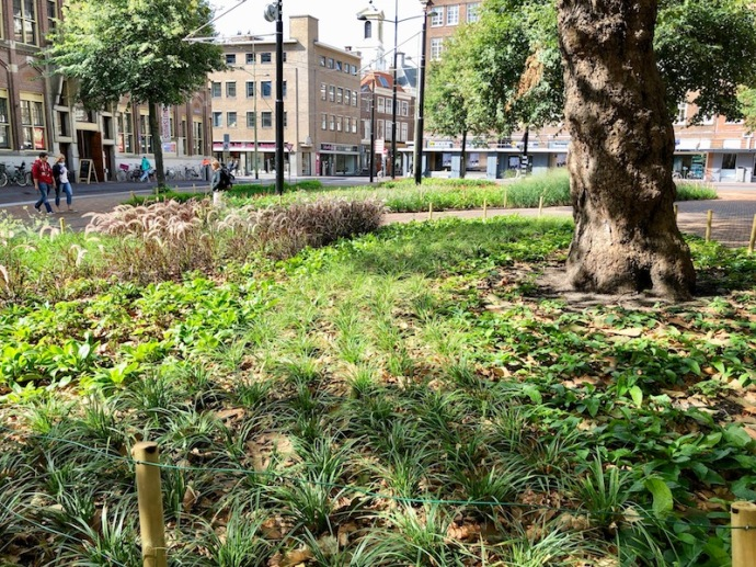 Landscaping around the Grote Kerk, The Hague 2018